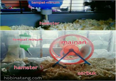 Aksesoris hamster