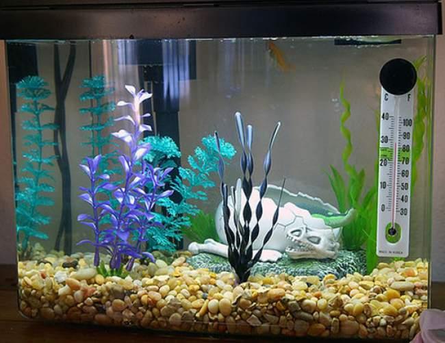suhu aquarium ikan cupang