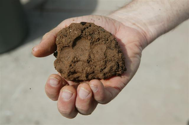 Cikal Bakal Manusia, Masya Allah Ternyata Diciptakan Dari Tanah Seperti Ini