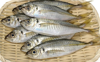 what do sardines taste like<br><br>In Indonesia, the horse mackerel fish is easy to found. Some supplier companies offer the horse mackerel. The meat is soft, and it contains lots of omega-3 for your health. We dedicate ourselves to a fish food industry; we always keep our commitment to give the best for people. Omega-3 fatty acids can help prevent breast cancer, prostate, kidney, and colon.<br><br>Therefore, you can choose the horse mackerel to be your meal. <br><br>The fish is a thing when it comes to the plate. The differences between sardine and mackerel lie on the seasoning inside. The fish oil is also one of the most beneficial ocean products you can use for your family. With the affordable price, of course, you'll get many recipes and creations for the fishes. The horse mackerel suppliers usually offer various price based on the size.  Here, we are promising to provide affordable price continuously.<br><br><h4>Info Pemesanan? Hubungi tunacannedindonesia.com!</h4><br>Email : <a href=