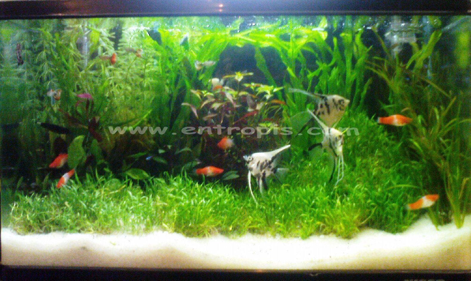 Best Aquarium Air Tawar Dekorasi Paling Populer Hiasan akuarium air tawar