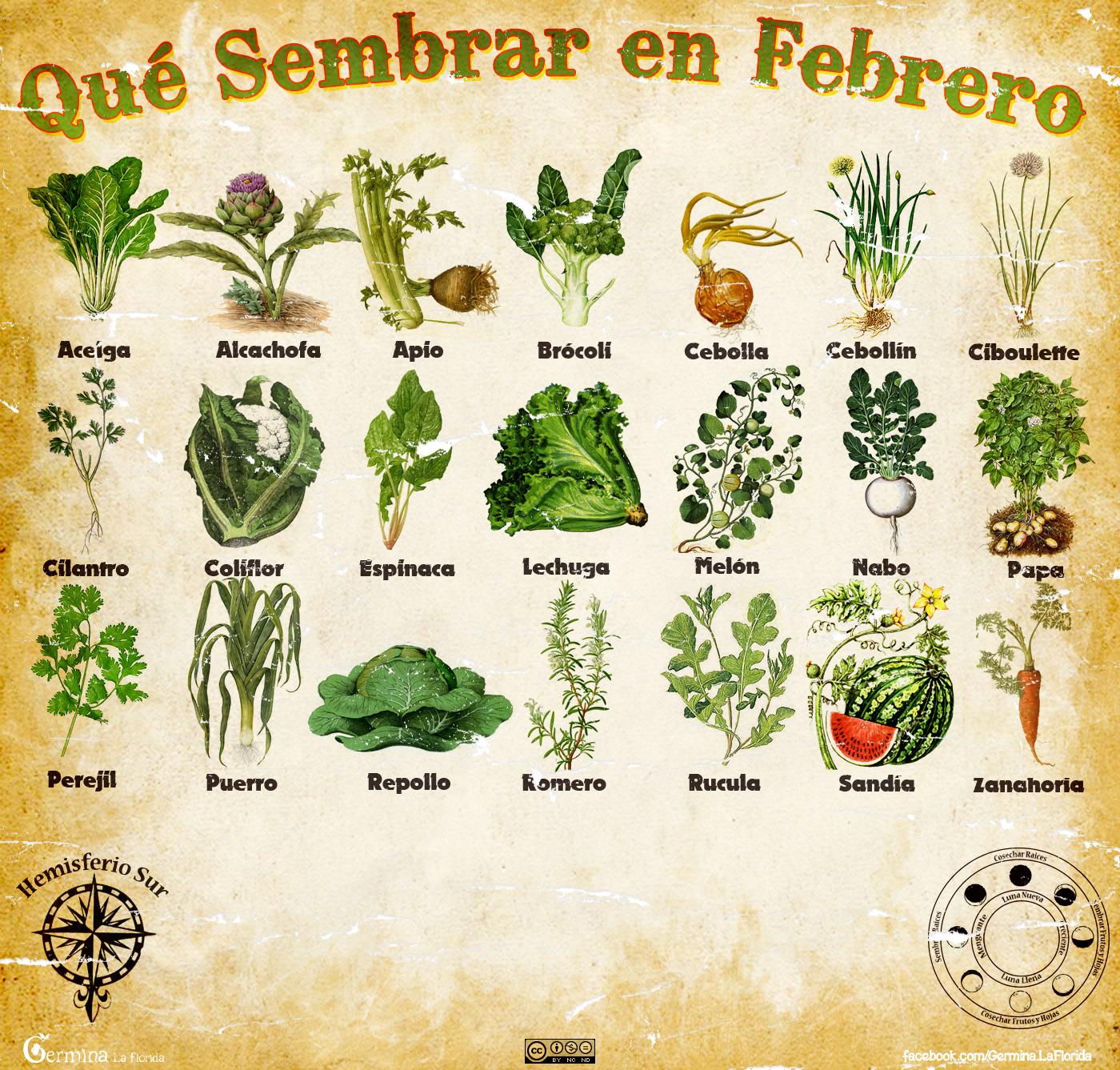 Germina la florida calendario de siembra de febrero - Que plantar en el huerto ...