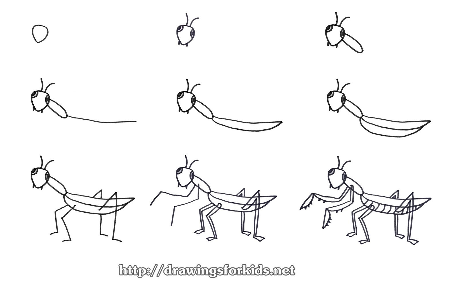 How To Draw A Praying Mantis Kids Drawingsforkids Net