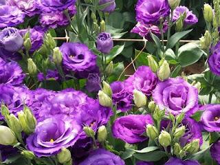 http://rezvanflower.ir/