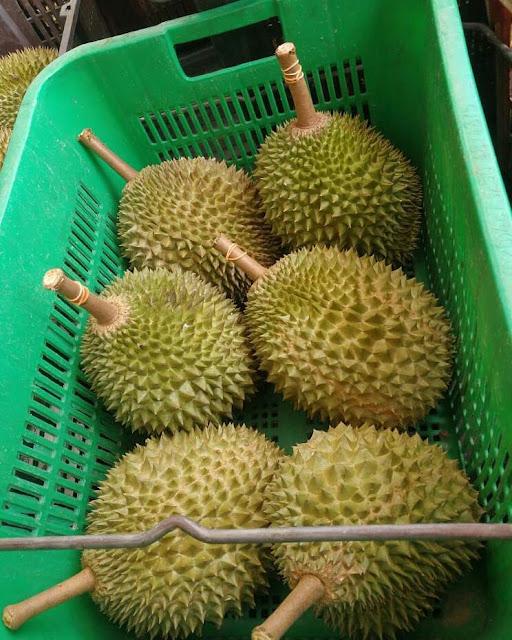 Kampung Durian di Bandar Lampung
