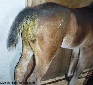 Diare pada kuda