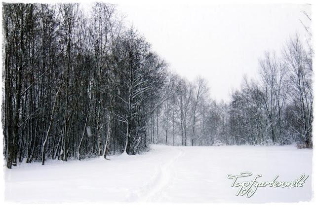 Gartenblog Topfgartenwelt Winter: verschneiter Wald mit Weg
