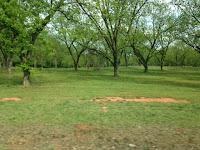 South Ga Pecan Trees