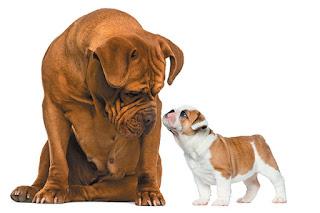 Dog Life - Présente ton nouveau chiot à ton vieux chien