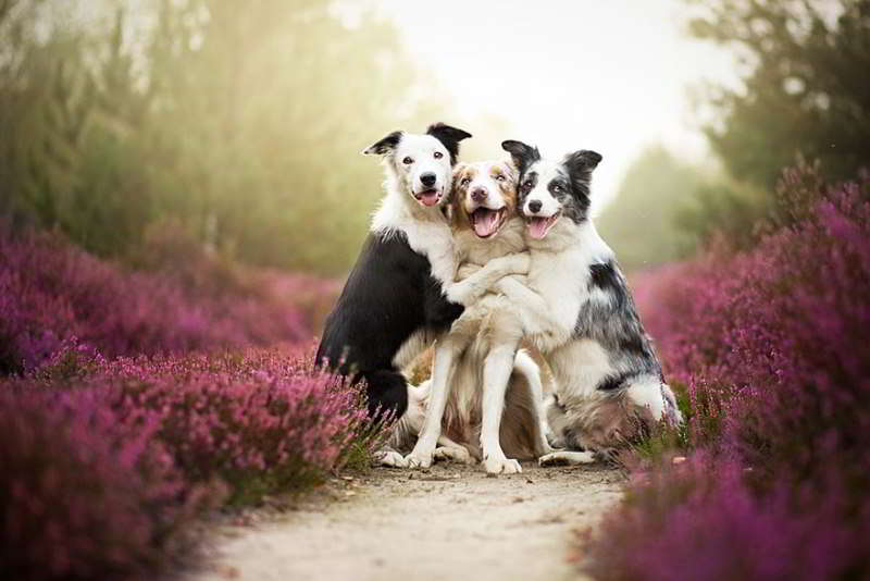 dog-photography-alicja-zmyslowska-01