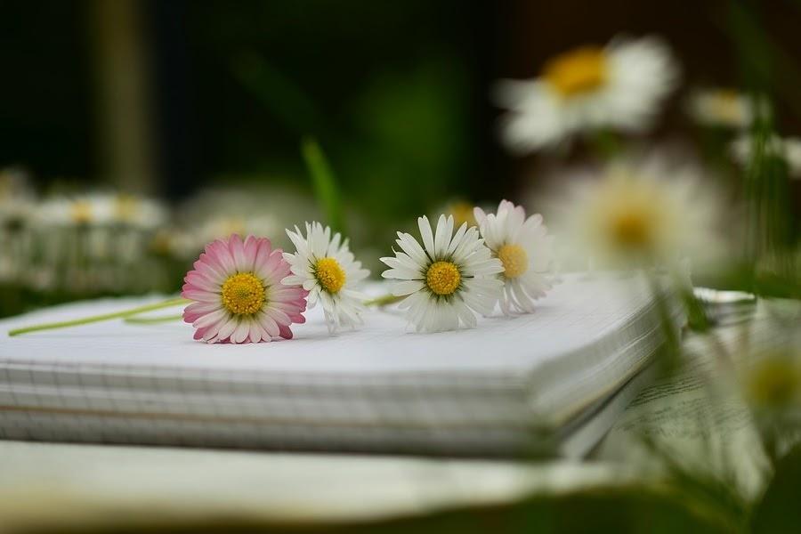 Caderno em branco com flores