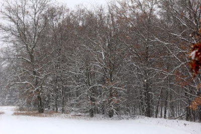snow cover, early December 2013