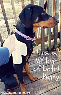 Quick Bath Wipes are a must-have product for PUPPY parents!  #QuickBathWipes #LapdogCreations #PuppyParents #PuppyProblems