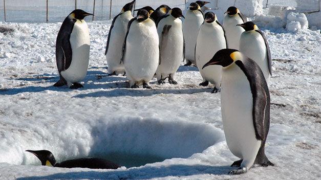 La Vida de los Pinguinos en La Antartida