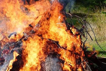 Bakar Sampah Di Bawah Pohon Bisa Kena Denda 5 Juta Rupiah Loh!