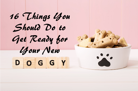16 Things You Should Do to Get Ready for Your New Doggy