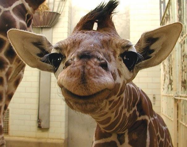 smiley animals