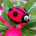http://www.ravelry.com/patterns/library/little-ladybird-amigurumi