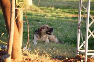 Αδέσποτοι σκύλοι σ' όλη τη Θεσπρωτία, ακόμη και σε μικρά χωριά! Μια συγκλονιστική αφήγηση μαθήτριας!