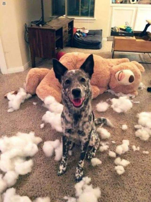 Cute dogs - part 201, funny dog pictures, adorable dog images