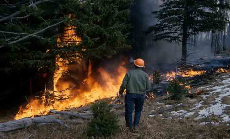 Dampak Kebakaran Hutan dan Lahan Terhadap Alam