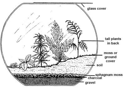 REFLECTIONS: Starting a Terrarium