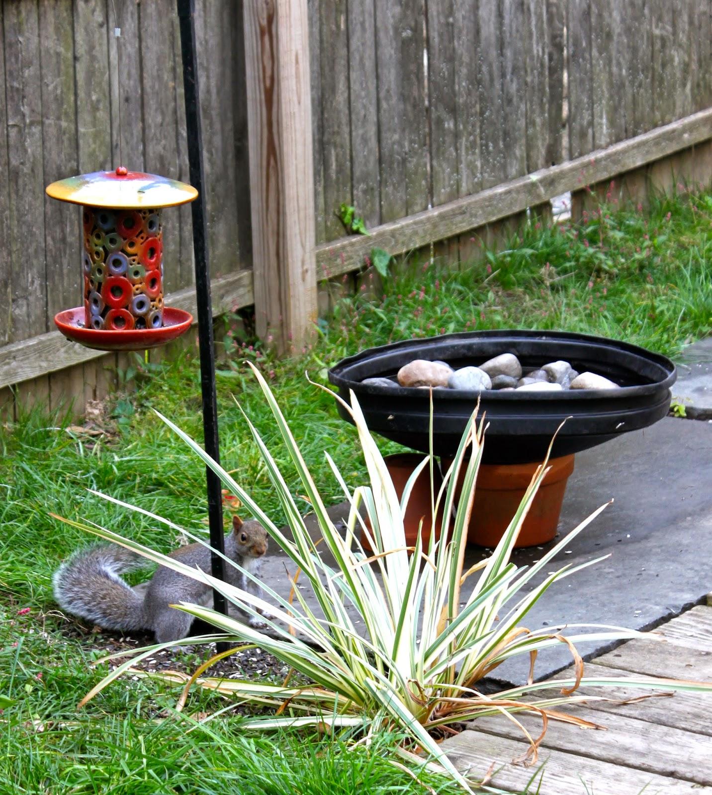 penn state extension philadelphia master gardeners for the birds