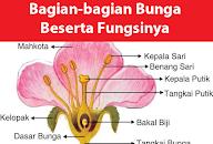 Gambar Bunga Sepatu Dan Fungsinya Ani Gambar