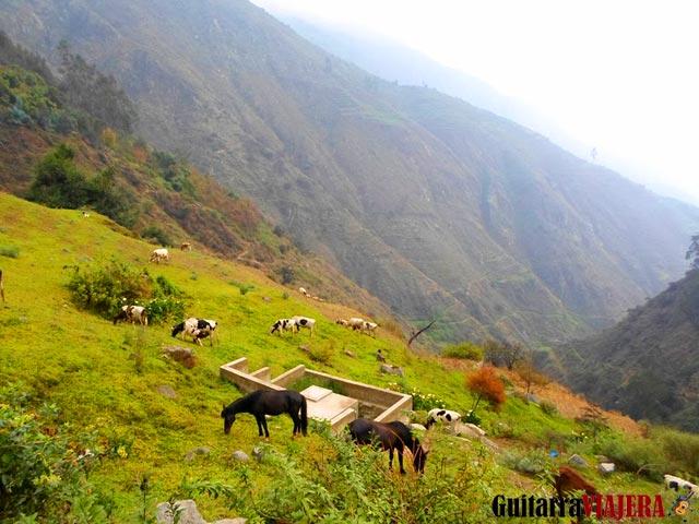 Camino a cascada de Palacala