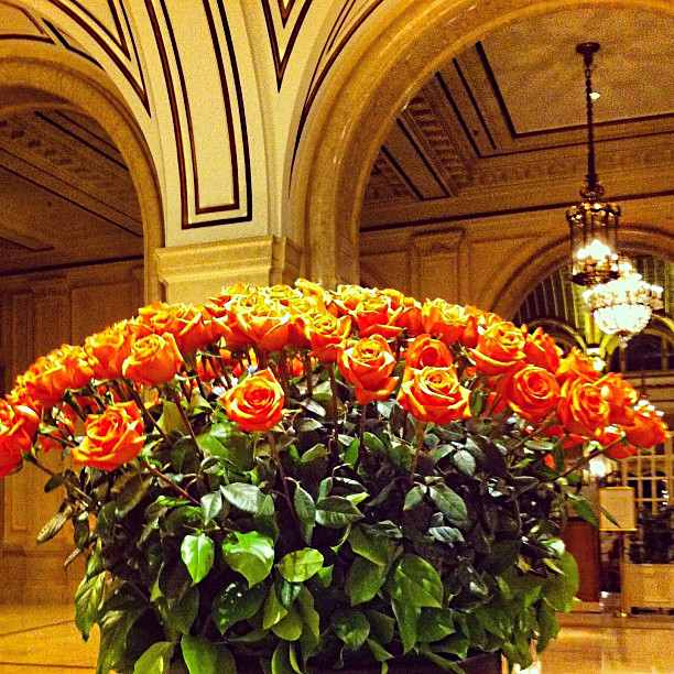 Roses in The Palace, San Francisco lobby