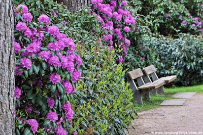 Parkbank auf dem Rhododendronpfad im Hamburger Stadtpark