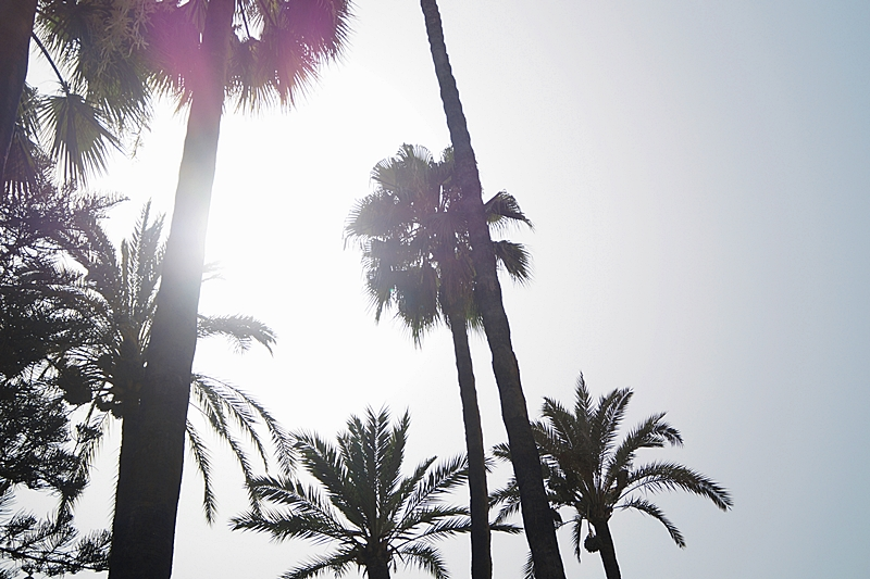 Palmen im Sonnenlicht (Sevilla-Reise im Juli)   Interrail Sommer 2017