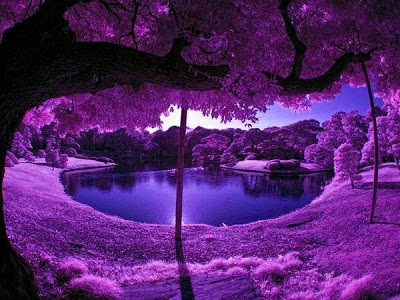El ''Bosque Morado'', China