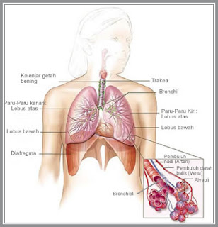 Kanker Paru-Paru Erang Perokok Pasif