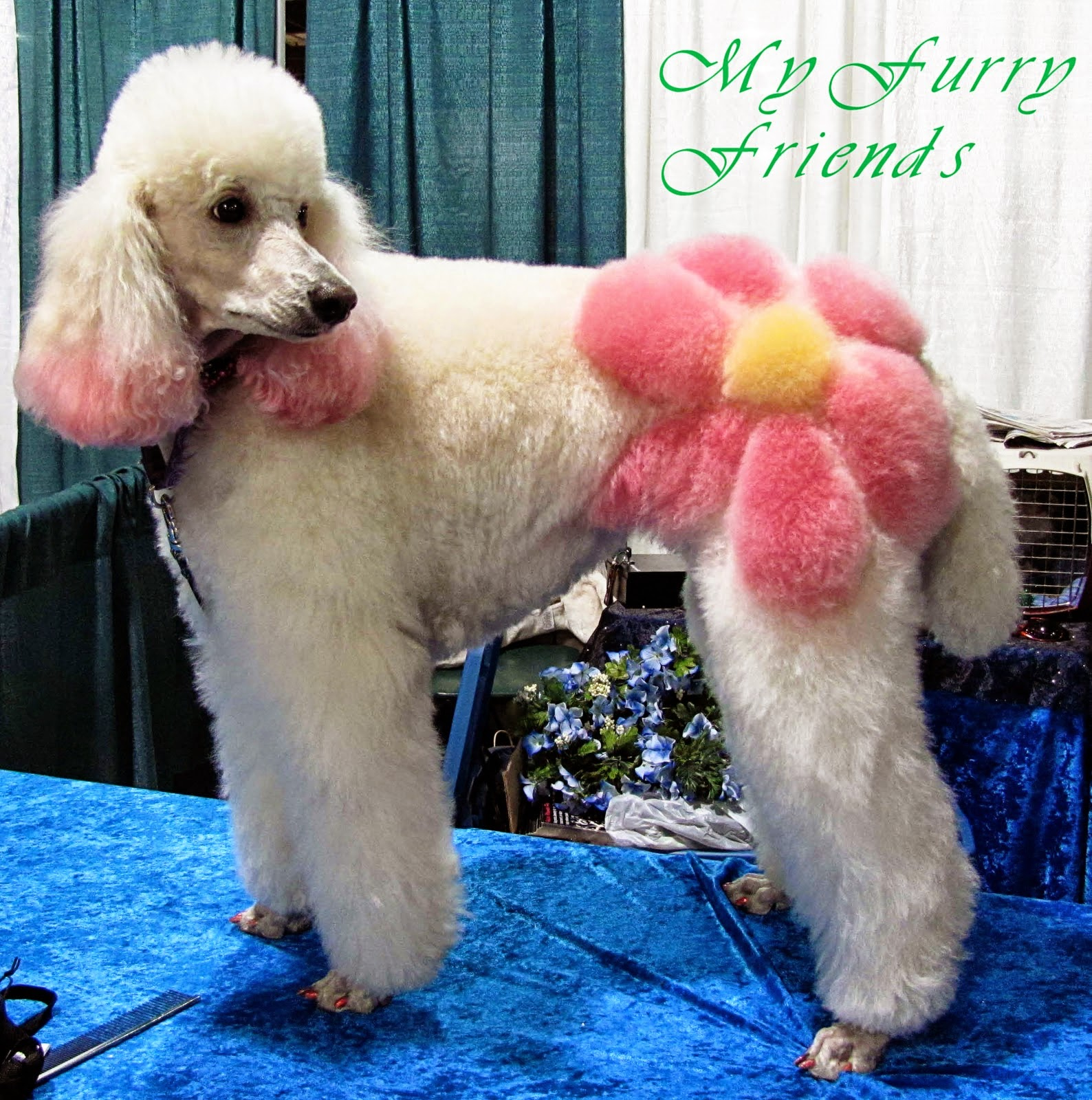 teñir, pelo, teñir con tizas de colores, manualidades, estetica, mascotas