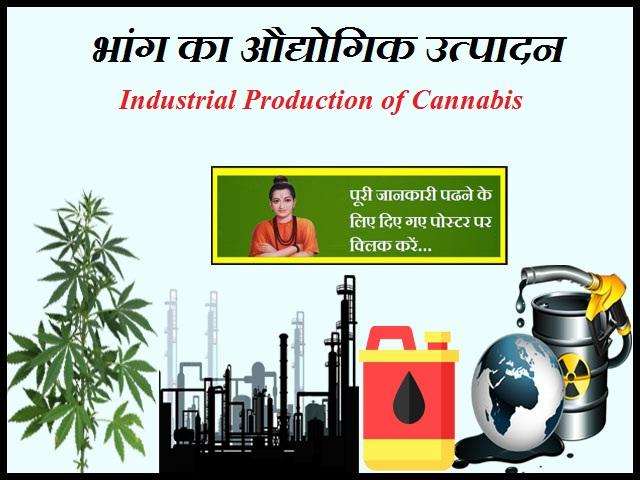 Industrial Production of Cannabis-भांग का औद्योगिक उत्पादन