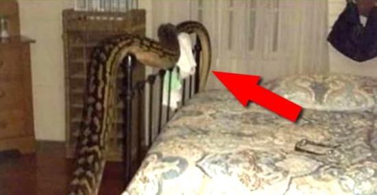Mulher acorda com uma cobra gigante enrolada em sua cama