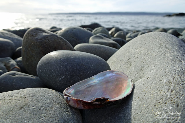 Newfoundland Ocean Photography