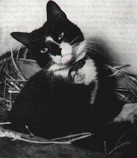 Gato Oskar