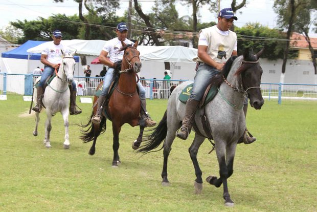 Número de criadores registrados de cavalos mangalarga cresce 30% em Pernambuco