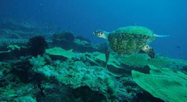 Menikmati Liburan Akhir Tahun di Pulau Derawan