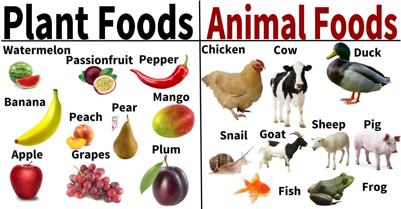 akanesi tamaki primary school food from plants animals akanesi