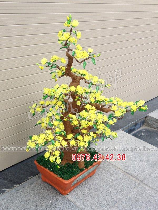 Goc bonsai mai dao cay hoa mai tai Au Trieu