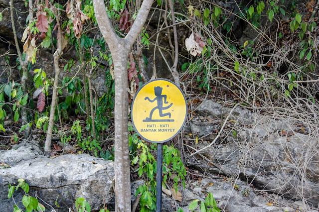 hutan monyet pulo manuk sawarna