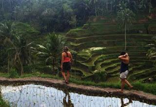 Rice Field Trekking at Tegallalang Rice Terrace