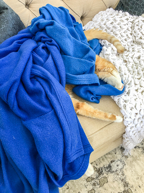 cat hiding under a blue blanket
