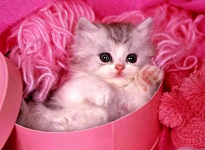 white-catybaby-pics-images