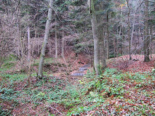 Leśny potok.