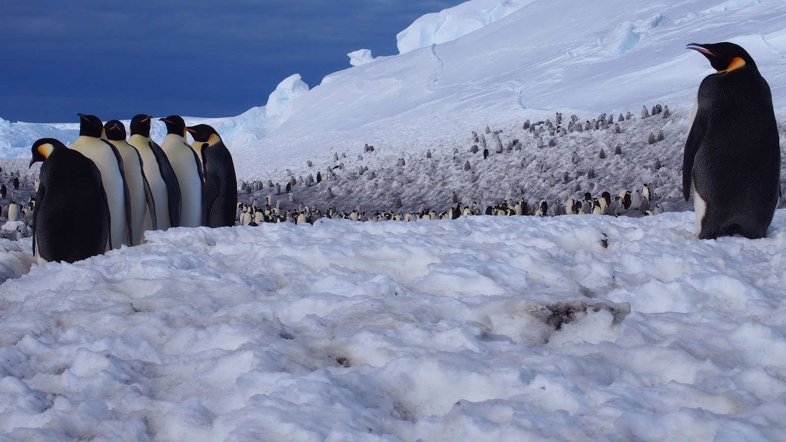 Are Emperor Penguins Eating Enough?