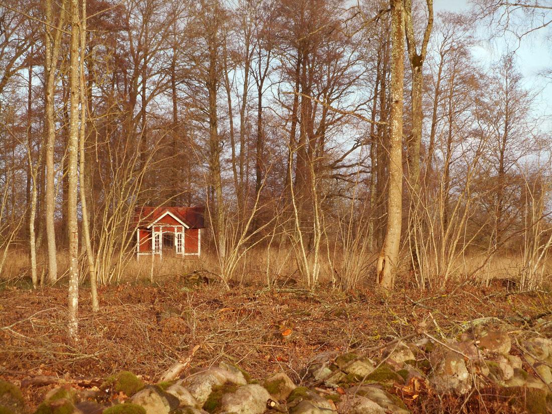 18 novembre 2015, una giornata in bosco